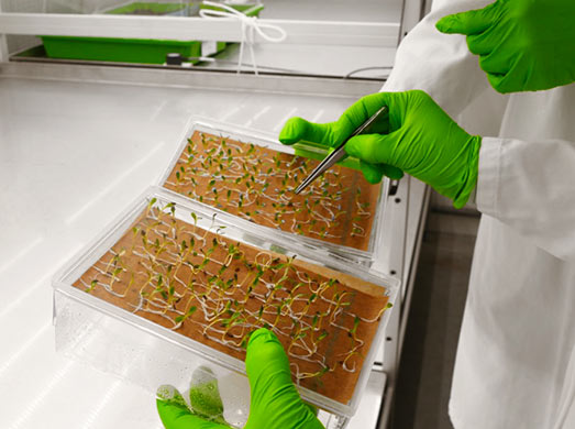 Tests innovants Seedlab